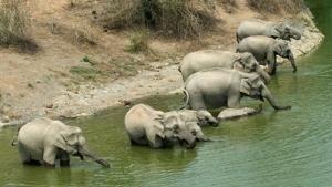 Wild Thailand