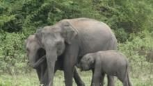 The Great Elephant Gathering show