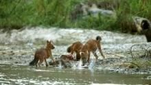 泰國野生世界Wild Thailand 節目