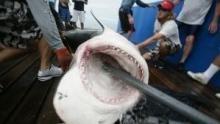 رجال القرش الأبيض برنامج