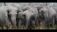 India: tra natura e misteri programma
