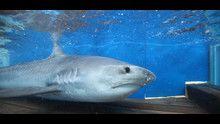 Shark Men programma