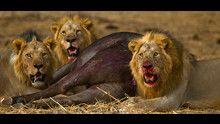Nella fossa dei leoni programma