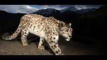 Afghanistan: Il regno del leopardo programma