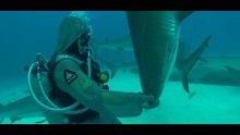 Gli squali più pericolosi programma