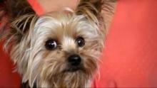 Cesar Millan: Doggie Nightmares show