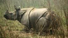 Chasing Rhinos show