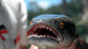 Fishzilla: Snakehead Invasion
