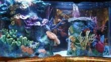 I re degli acquari programma