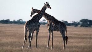 動物的情慾世界 Wild Sex