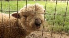 Shear Madness show