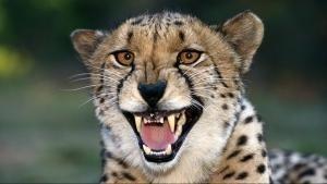 Animals Gone Wild