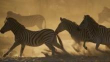 Il regno delle zebre programma