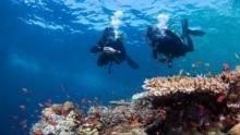 La grande barriera corallina programma