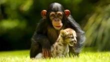 Strane coppie animali programma