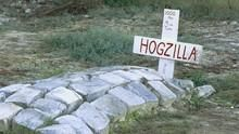 超級大豪豬 Hogzilla 節目