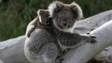 Wild Australia show