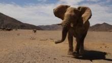 Il deserto degli elefanti programma