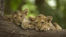 Secrets Of Wild India show
