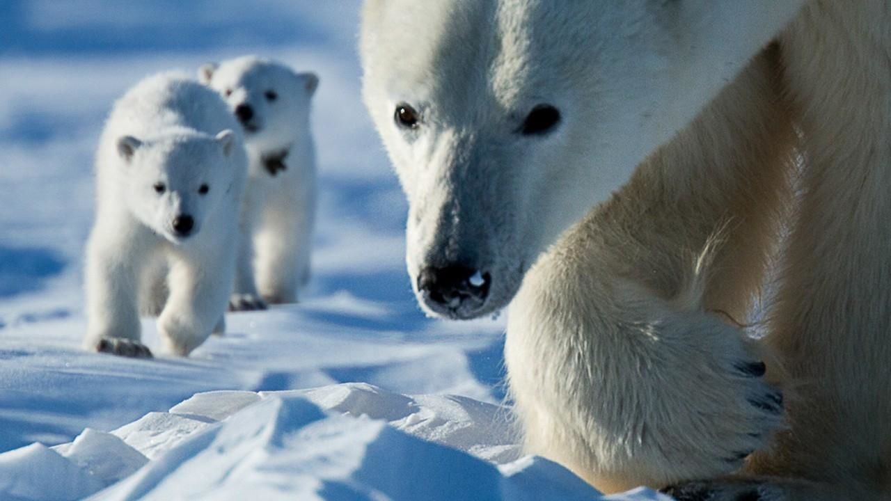 Watch Wild Canada Videos Online - National Geographic
