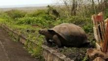 Access 360°: Galapagos show