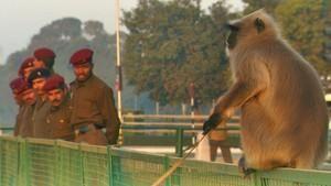 亞洲真風貌: 神牛神猴鬧印度 Divine Delinquents