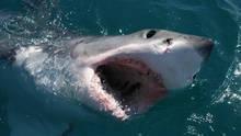 鯊魚新發現 Sharkville 節目