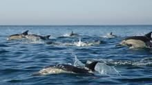 海豚大軍 Dolphin Army 節目