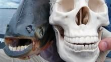 極限釣魚 Hooked 節目