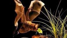 動物構造大揭密 Animal Impact 節目