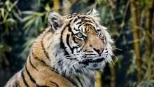 重振虎威 Tigers: Fighting Back 節目