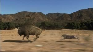 Prehistoryczne drapieżniki
