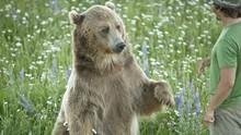 灰熊大探索 Expedition Grizzly 節目