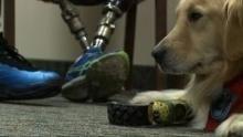 Super animali bionici programma
