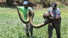 巨蛇之祕 Anaconda: Queen Of The Serpent 節目