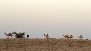 Access 360° World Heritage: Turkanasøen