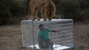Man v. Lion