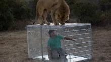 Man v. Lion show