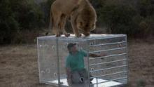 人獅戰  節目