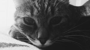 Big Cat Week: La Gallery dei Fan programma