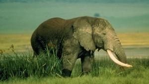 גן העדן הקטלני של אפריקה