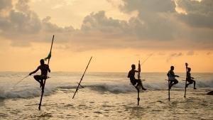 Dzika Sri Lanka