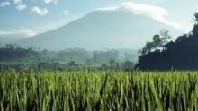 Wild Indonesia show