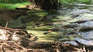 Když krokodýli pojídali dinosaury