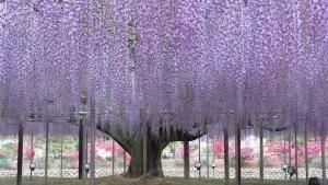 Giappone: natura segreta