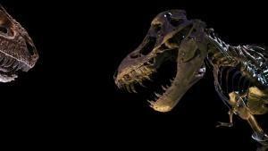 Тираннозавр: чемпион по выживанию
