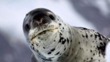 Wild Antarctica show