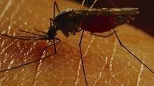 蟲蟲入侵 Bug Attack 節目