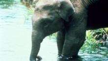 Elephant Mountain show