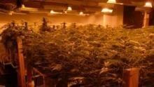 L'impero della droga programma